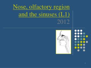 Nose,  olfactory region and the sinuses (L1) 2012