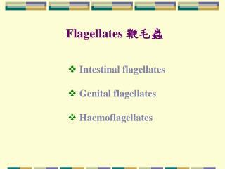 Flagellates  ???