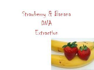 Strawberry & Banana  DNA  Extraction