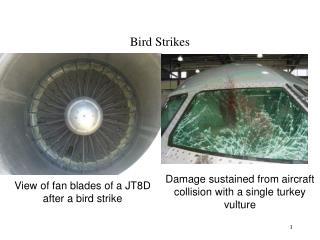 Bird Strikes
