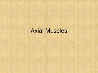 Axial Muscles