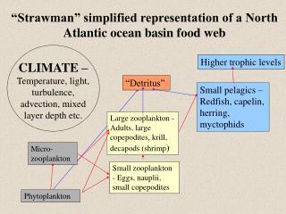 Large zooplankton - Adults, large copepodites, krill, decapods (shrimp )