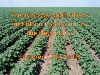 Precision Ag Applications in Cotton Production in the High plains