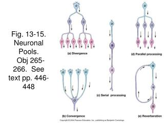 Fig. 13-15.  Neuronal Pools.   Obj 265-266.  See text pp. 446-448