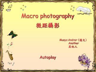 Macro photography 微距攝影