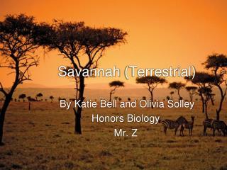 Savannah  (Terrestrial)