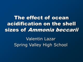 The effect of ocean acidification on the shell sizes of  Ammonia beccarii