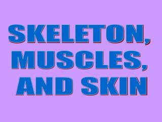 SKELETON,  MUSCLES,  AND SKIN