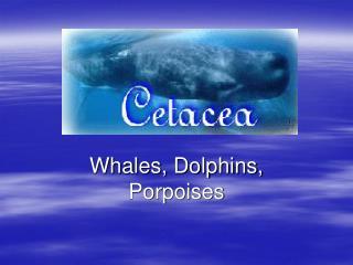 Whales, Dolphins, Porpoises