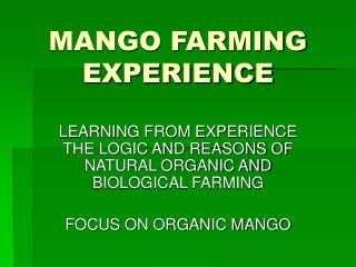 MANGO FARMING EXPERIENCE