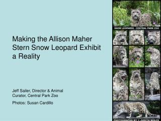 Making the Allison Maher Stern Snow Leopard Exhibit a Reality