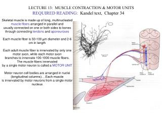 LECTURE 13:  MUSCLE CONTRACTION & MOTOR UNITS