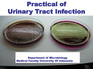Practical of Urinary Tract Infection