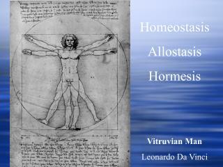Homeostasis Allostasis Hormesis Vitruvian Man Leonardo Da Vinci