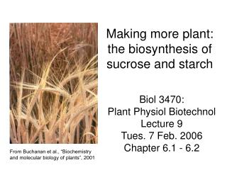 Making more plant: the biosynthesis of sucrose and starch