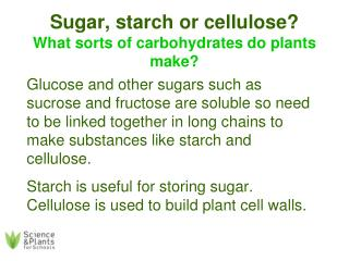 Sugar, starch or cellulose? What sorts of carbohydrates do plants make?