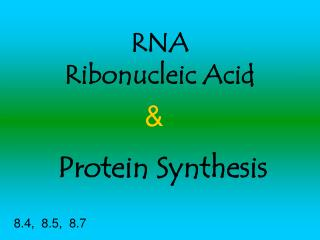 RNA Ribonucleic Acid