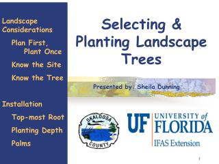 Selecting & Planting Landscape Trees