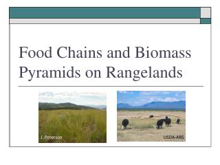 Food Chains and Biomass Pyramids on Rangelands