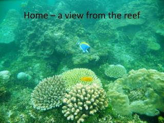 Home – a view from the reef