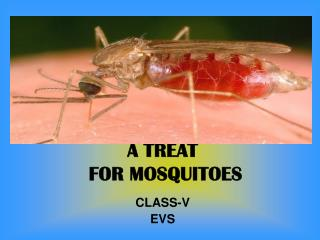 A TREAT  FOR MOSQUITOES