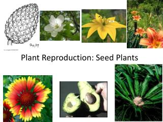 Plant Reproduction: Seed Plants