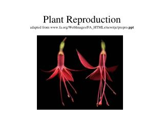 Plant Reproduction adapted from fa/WebImages/FA_HTMLs/newitje/prepro. ppt