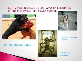 ESTOS  SON EJEMPLOS DE LOS CASOS EN LOS QUE SE PUEDE PRESENTAR  MALTRATO ANIMAL: