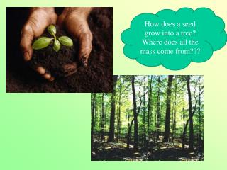 How does a seed grow into a tree?  Where does all the mass come from???
