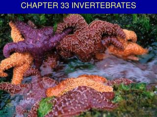 CHAPTER 33 INVERTEBRATES