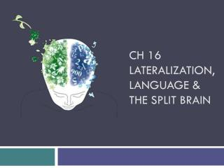 Ch 16 Lateralization, Language & the Split Brain
