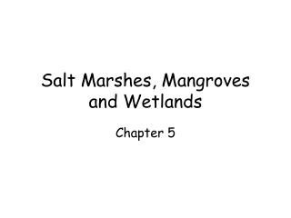 Salt Marshes, Mangroves and Wetlands