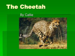 The Cheetah