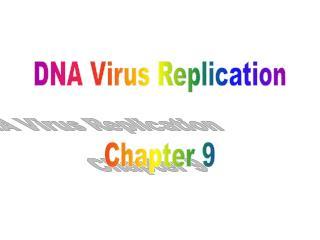 DNA Virus Replication Chapter 9