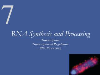 RNA Synthesis and Processing Transcription Transcriptional Regulation RNA Processing