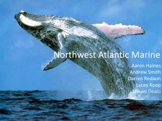 Northwest Atlantic Marine