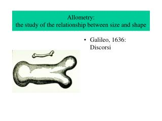 Allometry:  the study of the relationship between size and shape