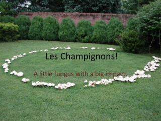 Les Champignons!