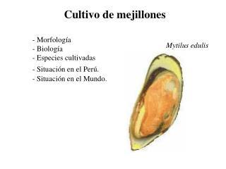 Cultivo de mejillones