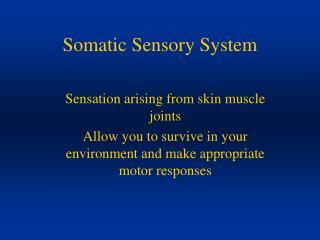 Somatic Sensory System