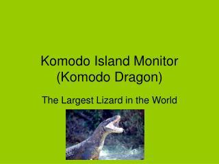 Komodo Island Monitor (Komodo Dragon)