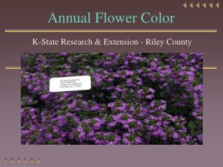 Annual Flower Color