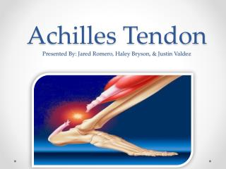 Achilles Tendon Presented By: Jared Romero, Haley Bryson, & Justin Valdez