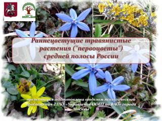 """Раннецветущие травянистые растения (""""первоцветы"""") средней полосы России"""