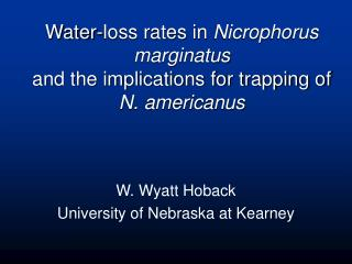 Water-loss rates in  Nicrophorus marginatus and the implications for trapping of N. americanus