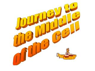 Journey to the Middle of the Cell