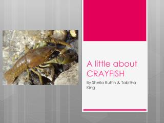 A little about CRAYFISH