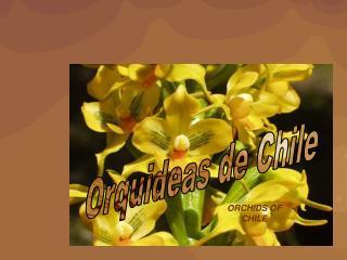 Orquideas de Chile