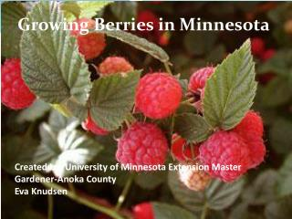 Created by: University of Minnesota Extension Master Gardener-Anoka County Eva Knudsen