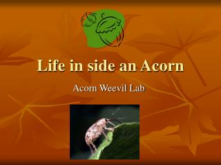 Life in side an Acorn